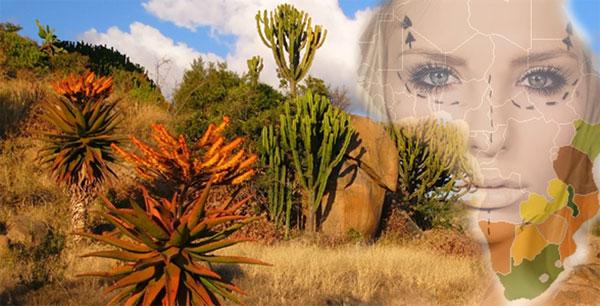 South Africa Cosmetic Tourisim